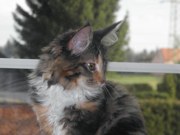 Malé kočičí ohlédnutí