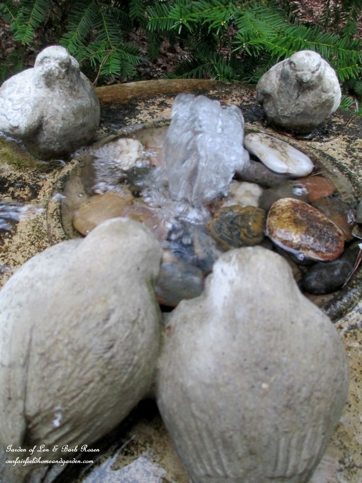 Bird Bath Fountain  http://ourfairfieldhomeandgarden.com/april-18th-whats-blooming-today/