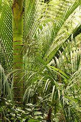 Jungle Art - Jungle by Les Cunliffe