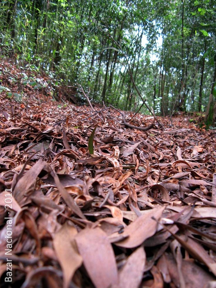 Lugar: Contulmo, VIII Región del BíoBío | Fecha: Agosto 2011 | Cámara: Canon Powershot A720 is