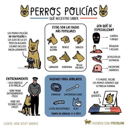 #Perros #Policía #Militar #K9 #Heroes #military #PoliceDogs #Frases #motivation #vida #live #Phrases #Pensamientos  #Reflexiones #Thoughts #Reflections #fotografia #photography #Foto #Photo #Peludos #Mascotas #Perros #Momentos #Dog #Mascottes #Pets #Mascot #Dogs #Shaggy #Furry #Hairy #Ilovedog #Dogs #Noalabandono #adoptanocompres