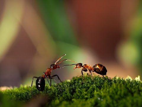 Дача- как избавиться от муравьёв   Елена-дача.ру