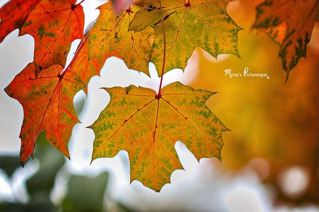 Beautiful fall foliage from @Mona from Mona's Picturesque