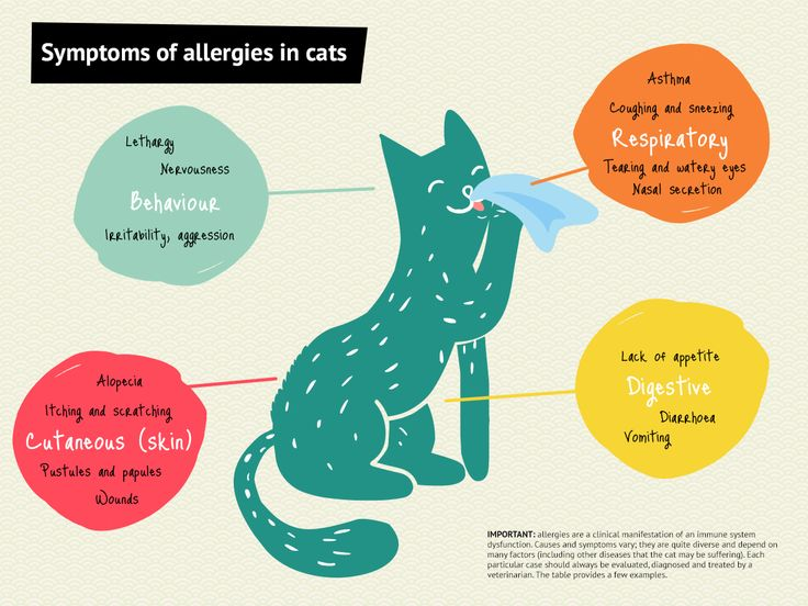 Cat nasal allergy