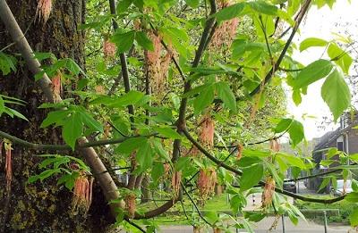 gras van jonker: Bloeiende bomen