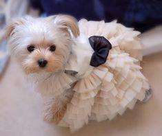 Artículos similares a Vestido blanco suave y elegante para mascota hermoso perro hecho a mano d …   – Yorkies