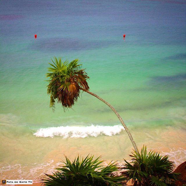 Reposting @patadegatotv:  I know it may sound ridiculous but this #fall has been kind of #cold in #Cancun and #RivieraMaya. Of course we're talking of temperatures of around 20 degrees celsius  #SweetDreams #amigos! .❄⛄  Sé que va a sonar ridículo pero éste otoño ha sido algo fresco en Cancún y Riviera Maya. Por supuesto, estamos hablando de temperaturas de alrededor de 20 °C