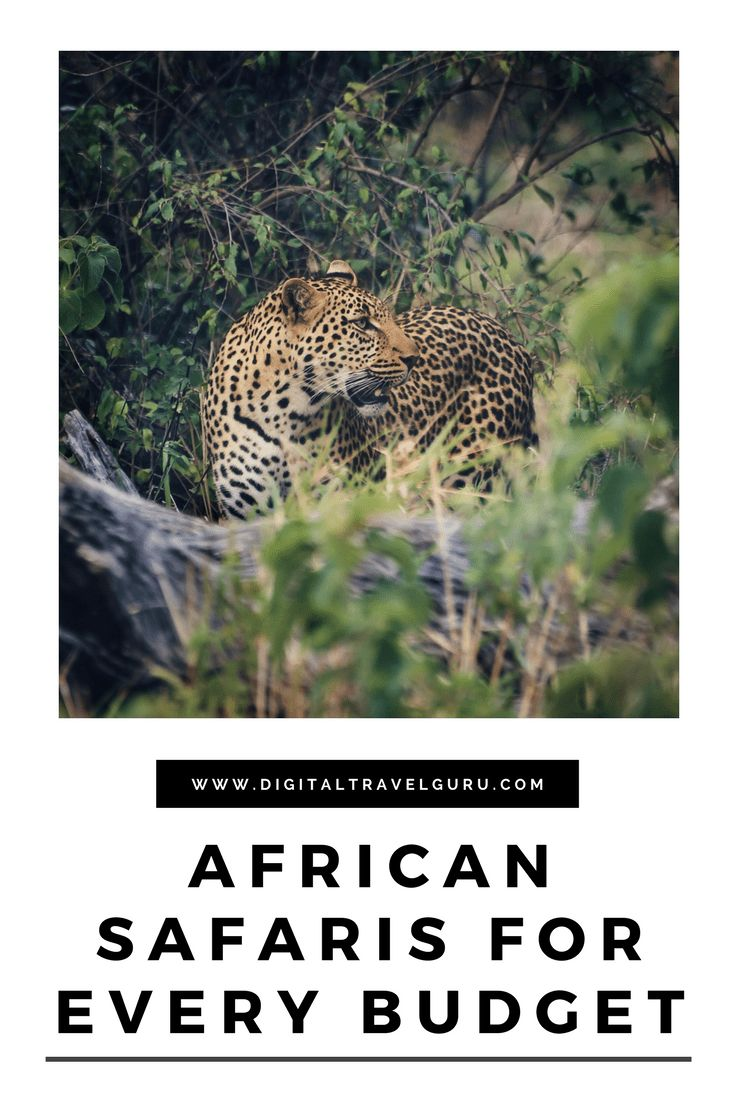 African Safaris For Every Budget