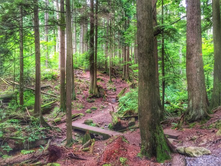 Two scenic hikes in Vancouver's Lower Mainland #ExploreBC #HikeBC #VancouverTrails