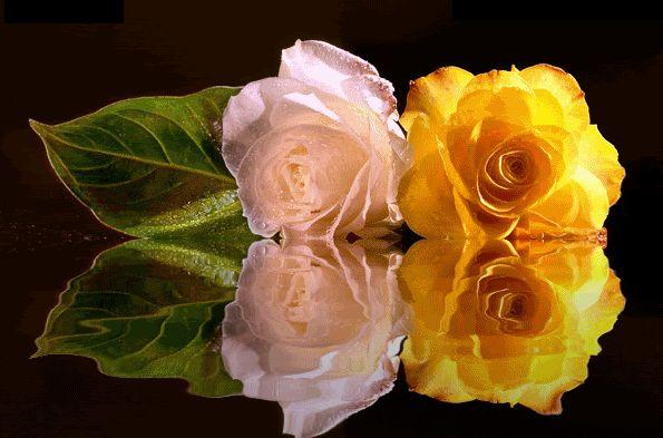 Un blog cu gif-uri: Gifuri noi flori