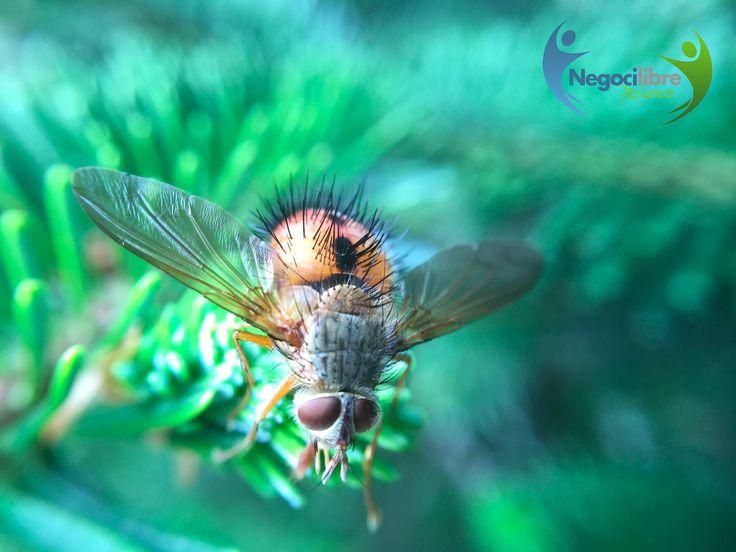 Sabías que... Es muy complicado atrapar una mosca