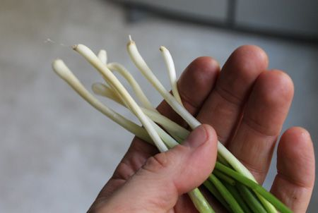 1000 images about edible bulbs rhizomes on pinterest