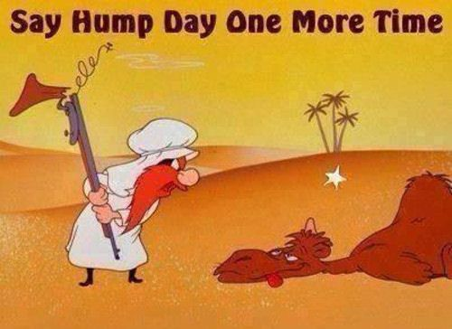 hump day funny quotes funny quotes days of the week humor hump day camel