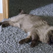 If your cat has a runny nose, eye discharge, a mild fever and sneezing you're likely to refer to the symptoms as a cold. Your veterinarian will call it an upper respiratory infection. In most instances, you can treat your cat's cold at home. If your cat's condition doesn't improve within a week of beginning treatment or if...