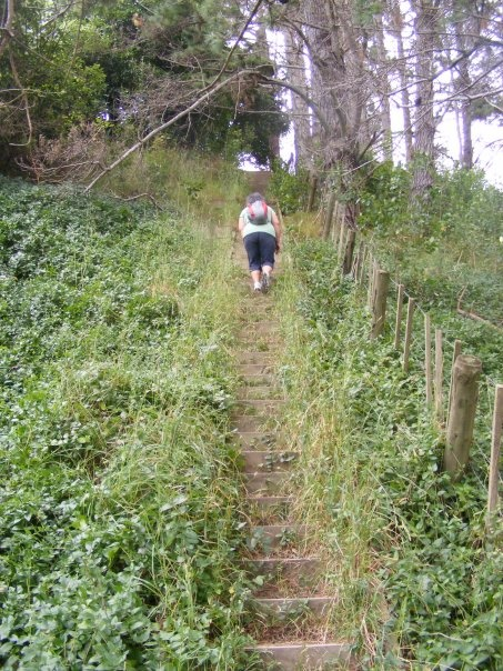 Jacobs Ladder - Okura Bush Walkway and the Dacre Cottage to Stillwater