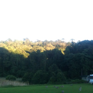 Waking up to wallabies in the Bunya Mountains