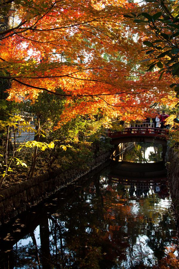 鎌倉・鶴岡八幡宮の紅葉