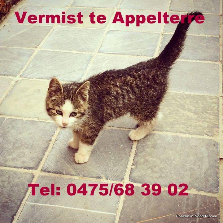 Sinds zaterdag 9 juli 2014 is Zorro vermist te Appelterre in de Neerstraat. Hij is pas 3 maanden oud. Wanneer hem iemand ziet gelieve contact op te nemen met Anouch 0475/683.902