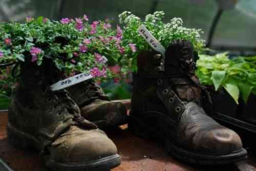 fleurs dans les vielles chaussues