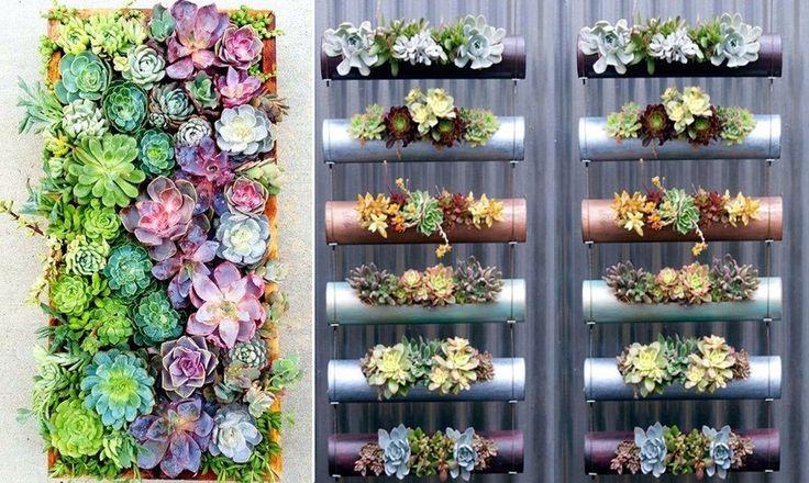 As imagens mostram um jardim vertical com suculentas for O jardins d eglantine