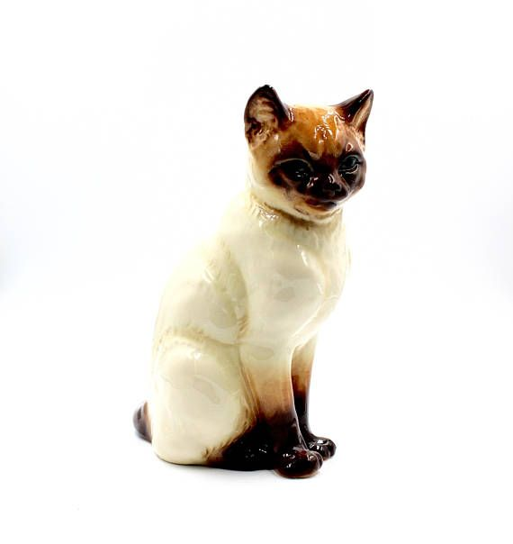 This Item Is Unavailable Burmese Cat Vintage Large Dark Blue Eyes