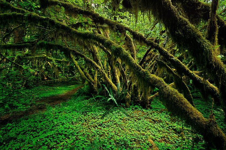 Olympic National Park | Travel Trip Journey: Olympic National Park, Washington