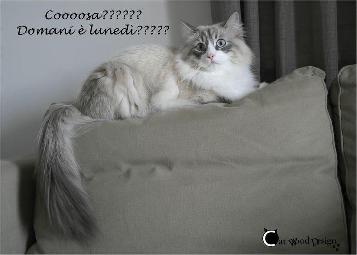 Domani è #lunedì???? #gatti #divertenti #cat