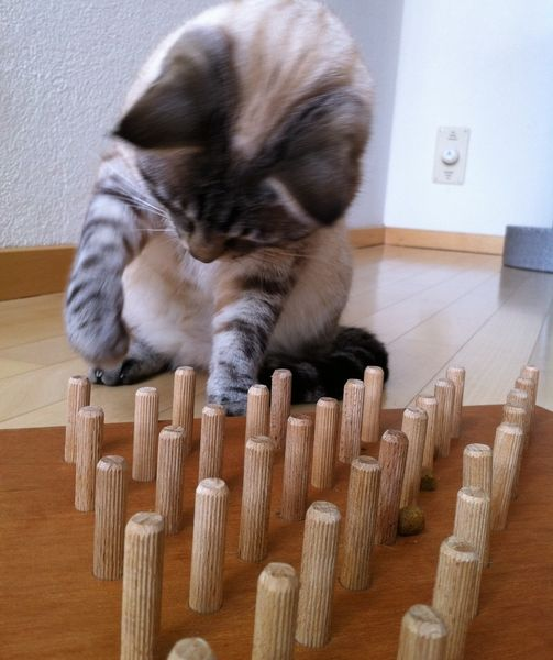 Katze: Spielzeug - Grosses Fummelbrett aus Holz - ein Designerstück von eugstis bei DaWanda