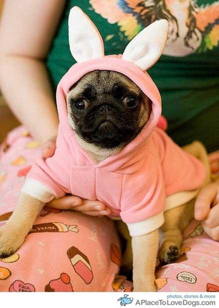 Easter pug!