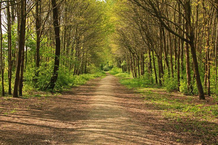 Wandelen in Zuid-Holland: 'Groen rondje Dordt' - ECKTIV COMMUNITY