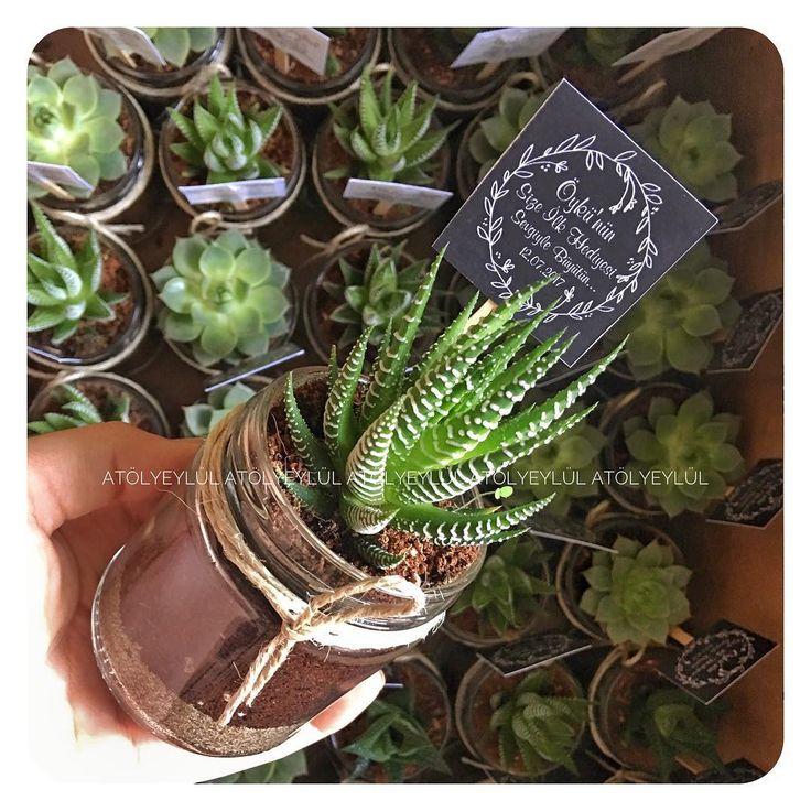 Mutlu bir hayatın olsun Öykü🌿🐣#sukulent #succulents #kaktus #cactus #succulove #nikahsekeri #babyshower #disbugdayi #birthdaygift #kurumsalhediye #weddingfavour #gift #favors #hediyelik #weddinggift #nişanhatırası #flowers #nişanhediyesi #sözhatırası #sözhediyesi #düğünhediyesi #düğünhatırası #kırdüğünü #l4l #picoftheday #bestoftheday #vsco #vscocam #vscowedding