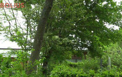 Må naboens træ hælde ind over min grund. Se filmen...