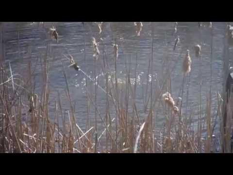 DIY Solar Pond Aerator - YouTube