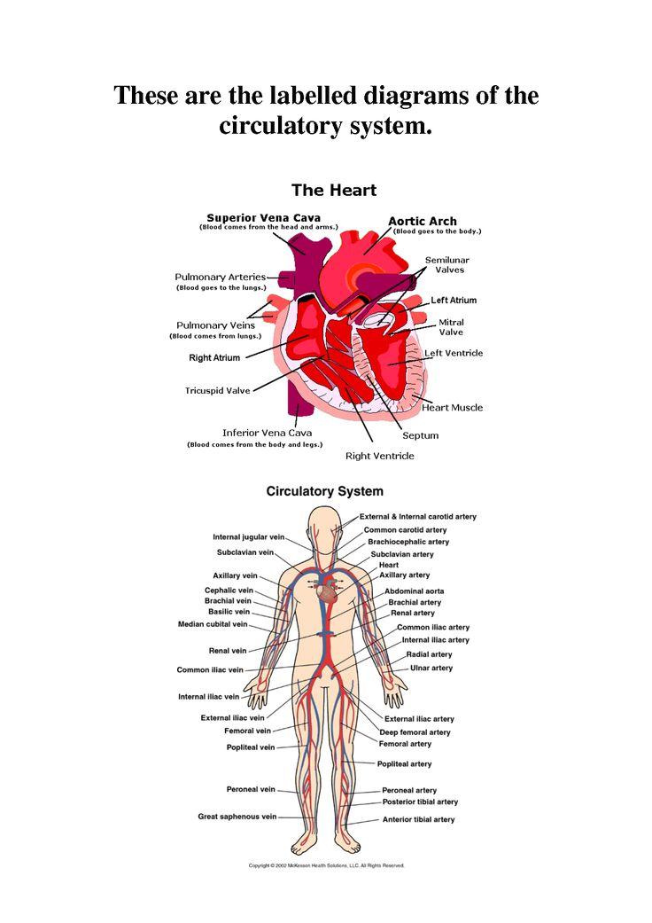 48 best The Human Body images on Pinterest | Nurses