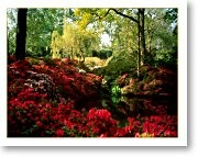 Isabella Plantation- the perfect place to escape from London (while remaining within the boroughs)!