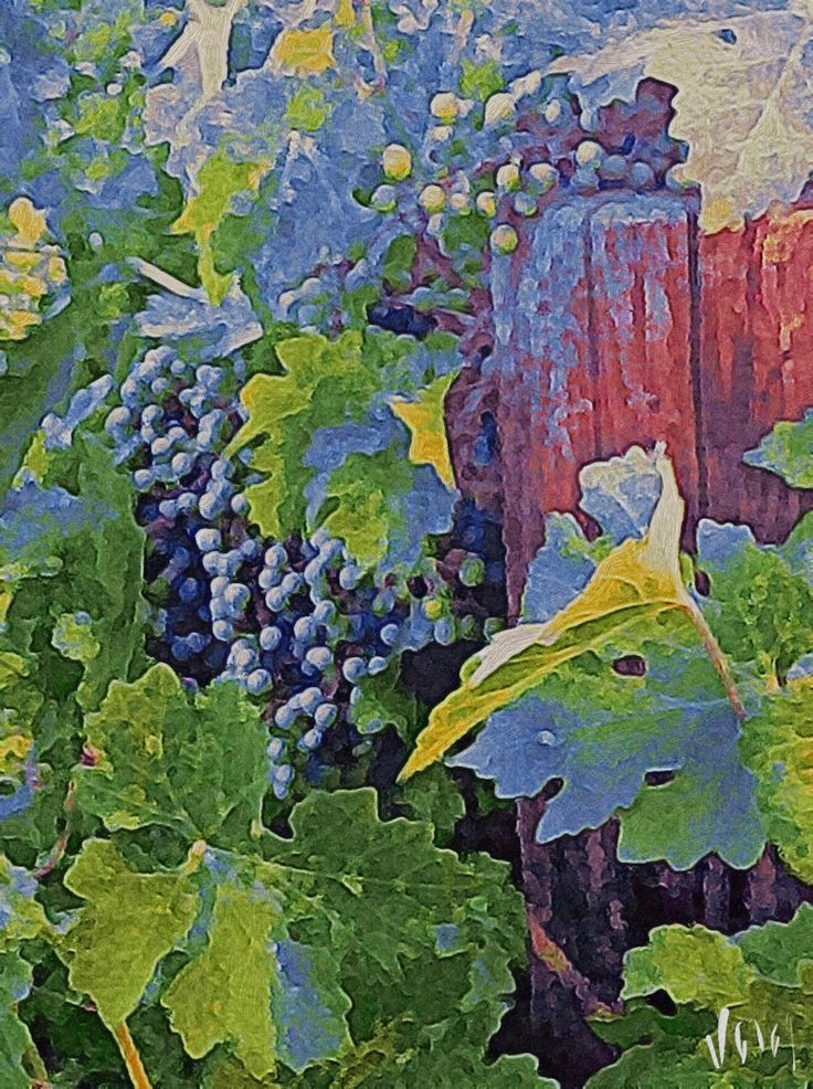 Grapes by an old fence (Photo Art)