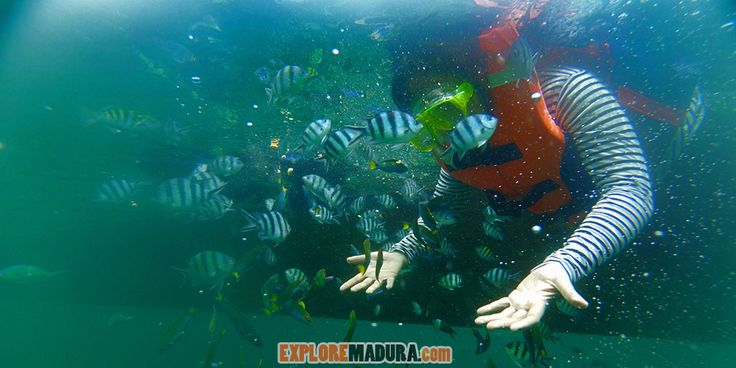 Snorkeling underwater GIli Labak, Madura