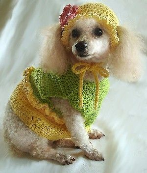Dog Crochet Pattern - Summertime 2-piece Dog Clothes and Hat Set