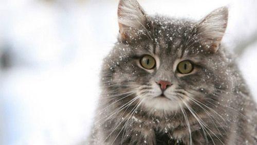 Consigli per gatti in autunno e in inverno