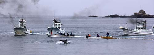 Banger Boats are death boats! Death or Imprisonment 4 Life! Learn about the horrors! Facts about Dolphins! Cove Guardians #tweet4taiji #HelpCoveDolphins