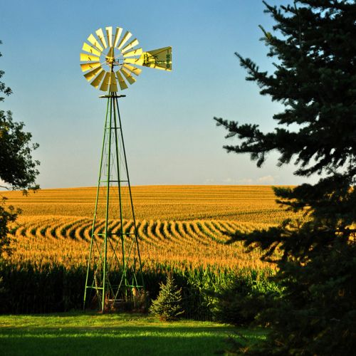 amber waves of grain ;) we don't see these windmills very much.  See plenty wind farms, though