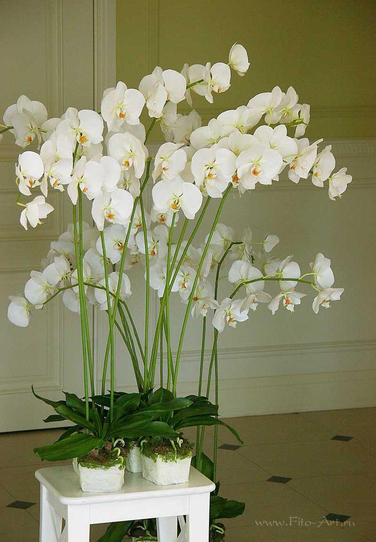 Орхидеи. Цветы из полимерной глины. Екатерина Звержанская.