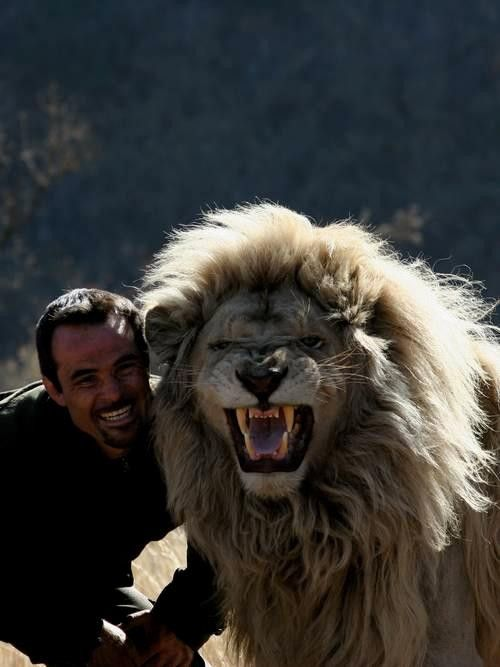 Kevin Richardson is my idol! This is exactly where I want to be with my life... With animals! -mk