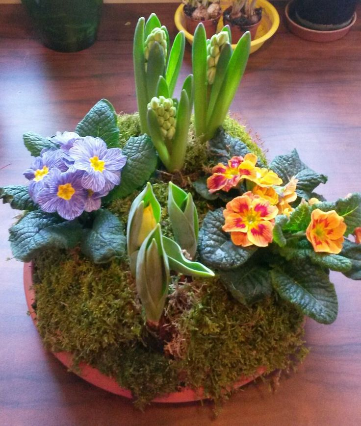 A piece of spring: tulips, primula, hyacinth and moss