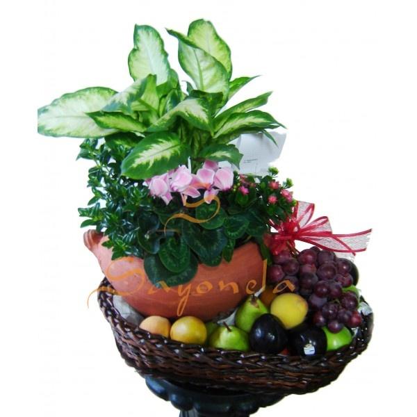 Arreglo compuesto por:  Plantas:          1 Violeta de los Alpez        1 Coralito        1 Pescadito        1 Difembaquia       Frutas:          2 Peras        2 Ciruelas        2 Duraznos        2 Granadillas        2 Manzanas Verdes y/o Rojas        1 Racimo de Uvas        Base en Mimbre