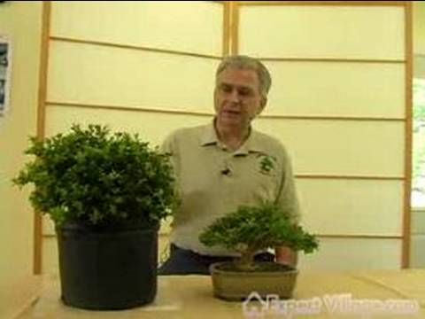 How to Grow Bonsai Trees : What is a Bonsai Tree and How is it Formed? - YouTube