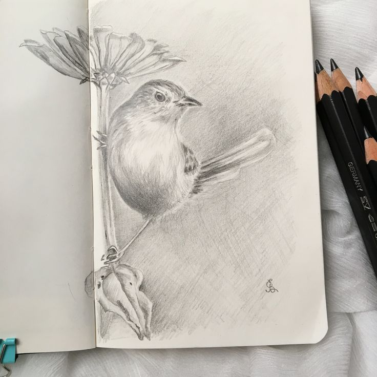 Drawing of a Little bird in pencil