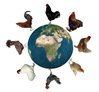 Efowl.com -- excellent site/source for poultry information (about the various breeds)...and they sell poultry also.