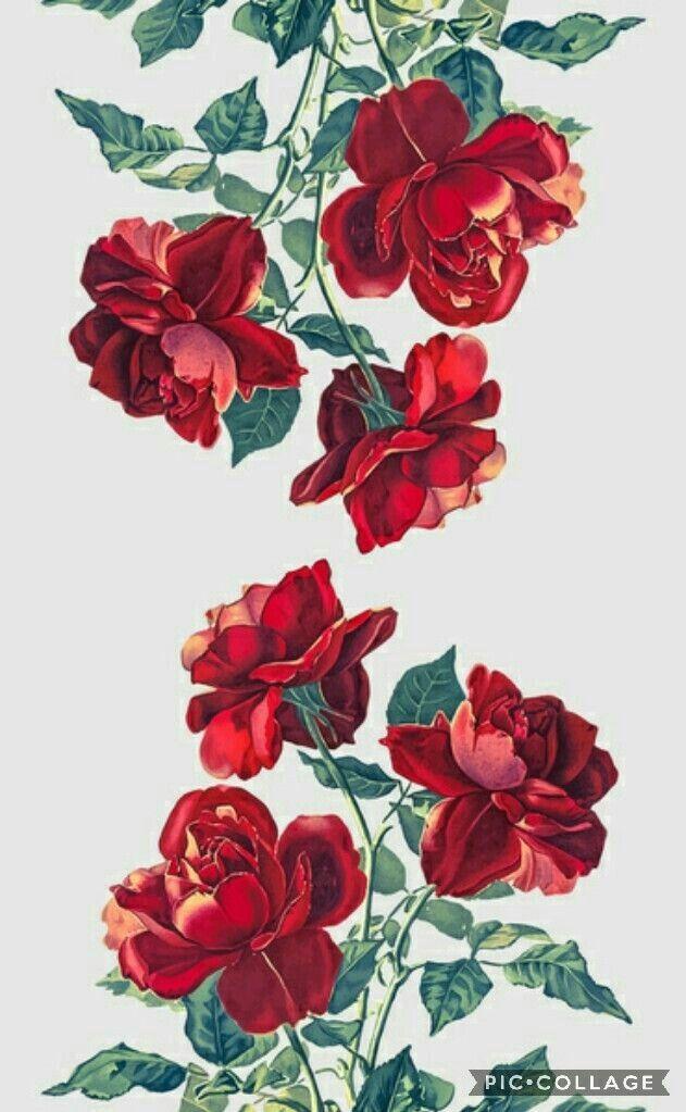 Rosas Rojas Dibujo Wallpaper Cellphone Wallpaper Y Illustration Art
