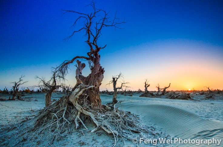 https://flic.kr/p/dtJqCh | Barren Land | 新疆-轮台-大漠苍茫,日落胡杨  Dead body of Diversifolius Poplar trees sitting in the arid, lifeless Taklamakan desert. Shot in Luntai county, Bayingguoleng Mongolian Autonomous Prefecture, Xinjiang province of China.  © All rights reserved. You may not use this photo in website, blog or any other media without my explicit permission.